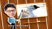 美食江门  潮汕美食 陳皮乳鴿 儿童包粽