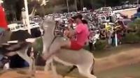 【哇哈哦哦】WTF!女子骑驴,毛驴途中发情上...