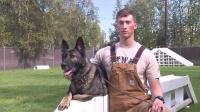 German Shepherd Military Dog