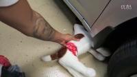 冯导】超过分恶作剧,让女友误认自己杀死狗狗,被吓哭了
