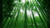 竹子的价值,竹纤维纸巾传承中国文化高水仙甘肃总代18294617326