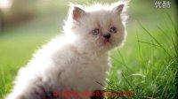 高清图片音乐视频相册【可爱的猫咪】2
