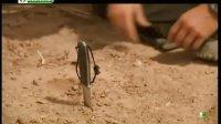 荒野求生秘技 2012 撒哈拉沙漠的求生技巧 120505 贝爷回归原始人生活