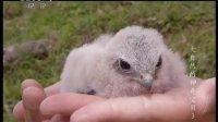 大自然的神奇宝贝之袋獾 120914
