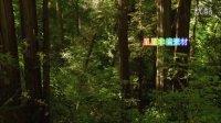 W031 高清实拍视频素材-绿色公园 森林 花草 树叶 影视后期素材