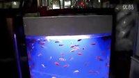 视频: 滕州水族馆,滕州巨金水族馆枣庄总代理,孔令涛13206325766