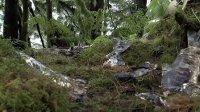 寰宇地理之美洲野性大地 森林