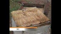 蜜蜂养殖技术:联系2820054988,蜜蜂春季管理(第一讲)视频
