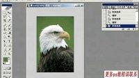 [PS]photoshop从头学 photoshop教程 ps教程 ps入门到精通 ps平面设计教程 (6)