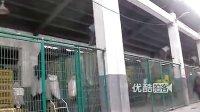 [拍客]上海关闭活禽交易市场防H7N9