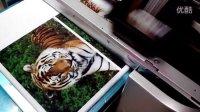 深圳龙杰科技的数码印花机--在T恤上打印老虎图案(T恤打印机)