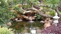 视频: 中山园林 阳台鱼池 假山效果图 加QQ377612274做假山水池
