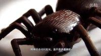 创新概念遥控玩具系列-超仿真遥控蜘蛛!!!!!震惊哦