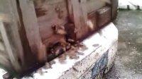 视频: 来自增城凡哥的小蜜蜂QQ2414809683