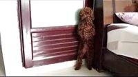 做错事罚站的泰迪狗熊