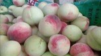 视频: 仙桃供应商 大量供应油桃白桃黄金桃 咨询QQ919037837