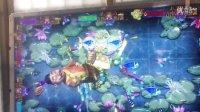 视频: 9900炮和珅打渔游戏机