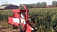 河北冀新牌茎穗兼收玉米收获机、秸秆回收玉米收割机