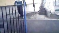 视频: 临夏ACR跑酷团队 联系QQ 1725055218