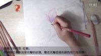 飞乐鸟手绘教学视频彩铅第01集——玉兰花的画法