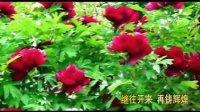 视频: 聊城惠农牡丹! 手机:18635812118 QQ:1151134051