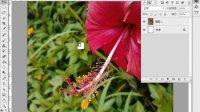 [PS]63-抓手工具放大镜工具的使用 photoshop cs6 零基础视频教程