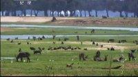 赞比西河之野性之河 130806