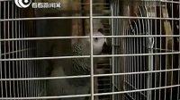 130816 看看新闻网-E锅汇:SNH48 戴萌、钱蓓婷