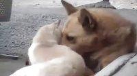 【云顶国际】猫狗情深