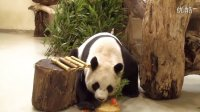 0831 圓圓慶生 Happy 9th Birthday to Giant Panda Yuan Yuan (7