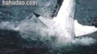 难得一见的两组大白鲨慢镜头
