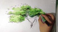 重庆新世立手绘植物线稿上色