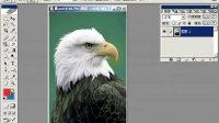 [PS]photoshop历史画笔工具