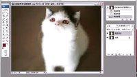 ps教程之如何去除猫咪的红眼持续曝光中!