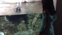 超萌水族馆海鹦,跟着你玩耍