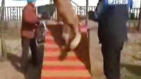 视频: 集中办犬证 6月底截止