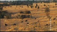 穿越非洲草原 130911