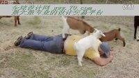 人与动物亲密接触 山羊给老爷爷按摩(70.com)
