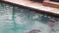 2010成都欢乐谷看海豚