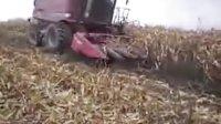 凯斯2188收割机 收割玉米
