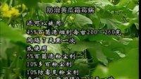 保护地黄瓜的病虫害视频