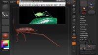 人类解剖学-ZBrush到MAYA的工作流程 昆虫制作02.wmv