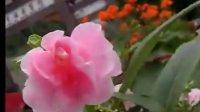 【視頻 VIDEO】廣東音樂(粵樂)『紫竹調』
