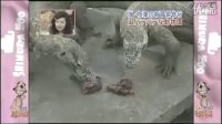 070208 Zoo (AT)