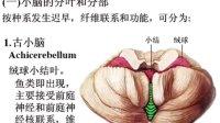 人体解剖学32