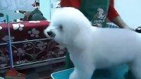 G宠物美容师就业方向?宠物美容师培训 汤姆狗宠物美容师培训学校