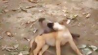 视频: 都闪开别拍了,夫妻打架有神马可看的http:www.y987.net203.html