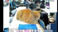 """北大""""学术猫"""" 爱听哲学课"""