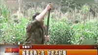 安徽祁门:板栗成熟上市 好吃不好摘  20131005  现场快报