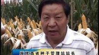 豫禾988 豫禾 988 高产 玉米种 抗到 抗病